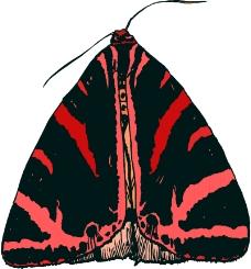 昆虫蝴蝶1024