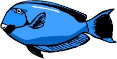 海洋动物0309