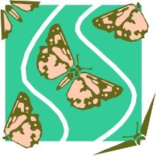 昆虫蝴蝶0674