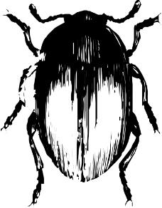 昆虫蝴蝶0487