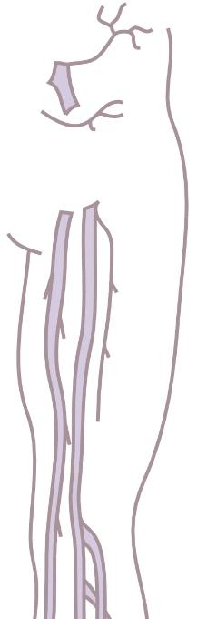 人体器官0301