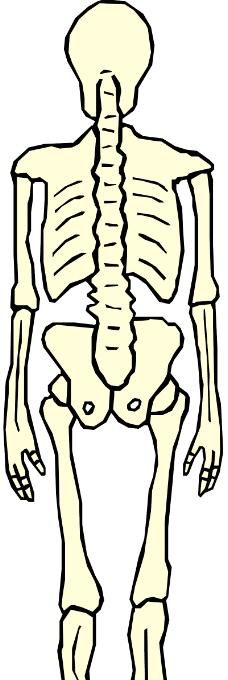 人体器官0251