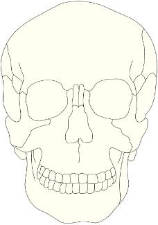 人体器官0279