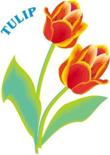 鲜花0847