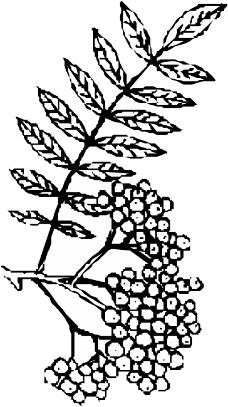 树木1032