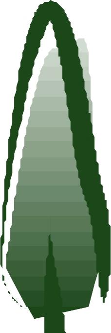 树木0719