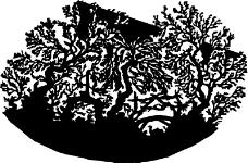树木1044