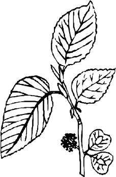 树木1031