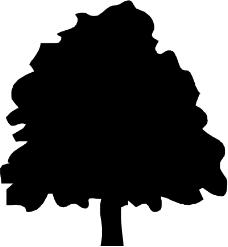 树木0641