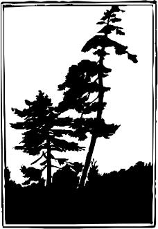 树木0920