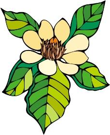鲜花1242