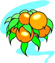 蔬菜水果0586