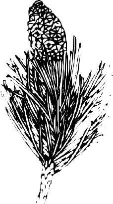 树木1041