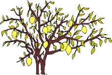 树木0443