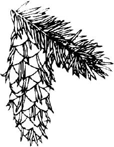 树木1039