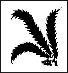 树木0917