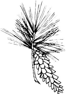 树木1034