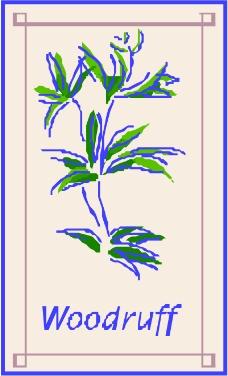 树木0813
