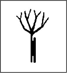 树木0901