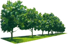 树木0770