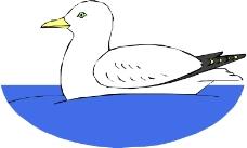 鸟类动物0209