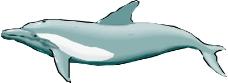 海洋动物0340