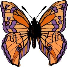昆虫蝴蝶1039