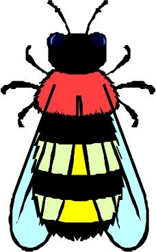 昆虫蝴蝶0279