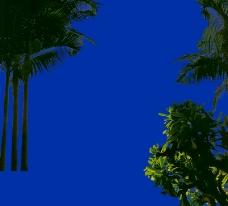 热带树群0003